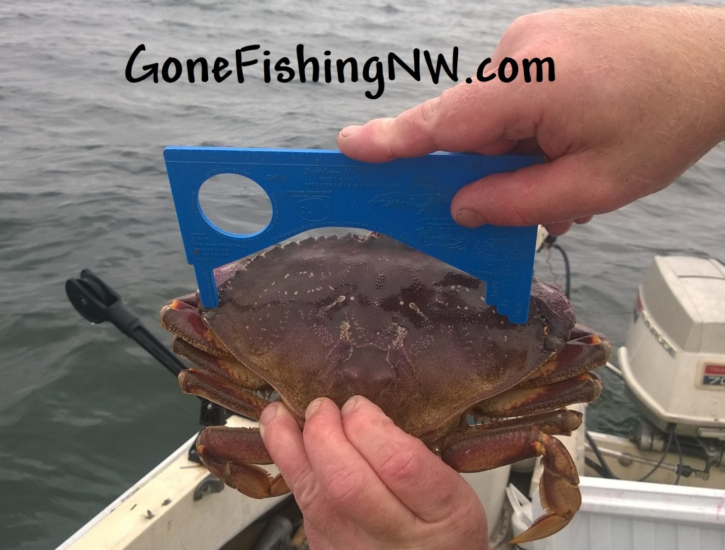 Oversize Crab