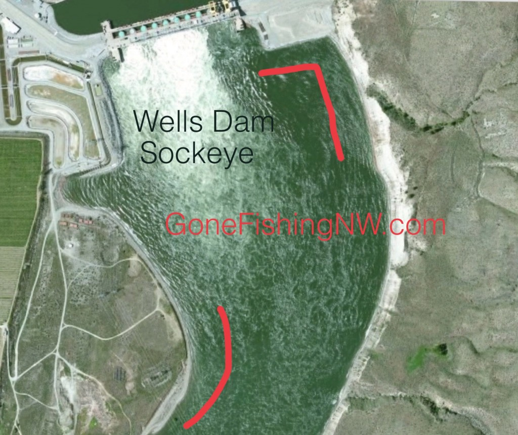 Wells Dam Sockeye Map