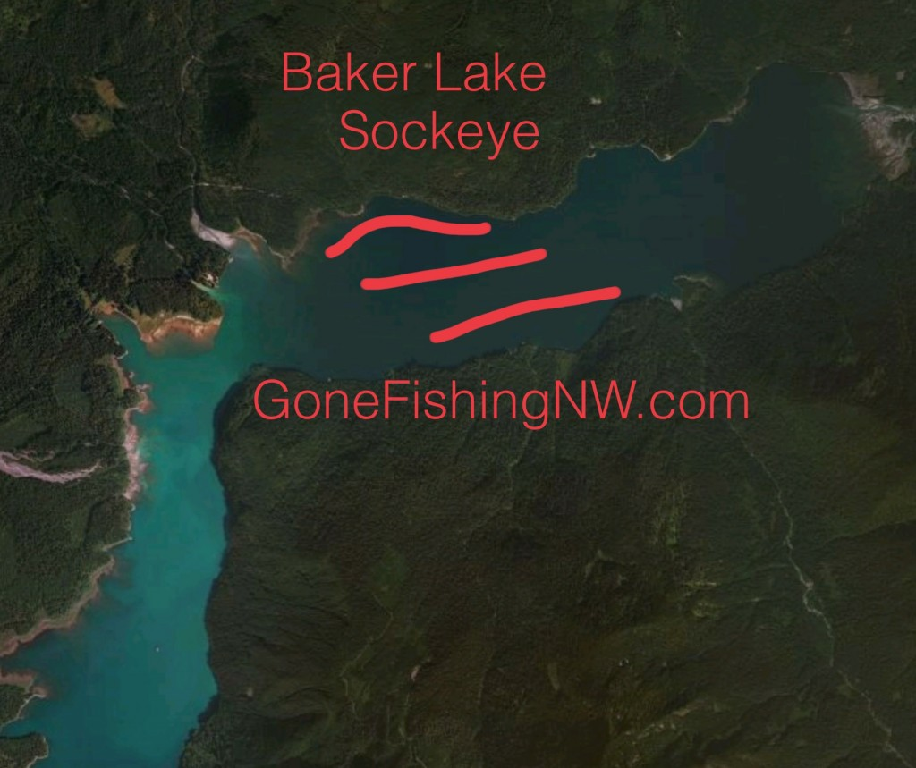 Baker Lake Sockeye Map