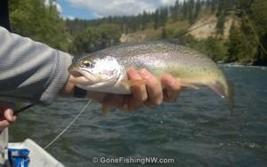 Nice Yakima Rainbow