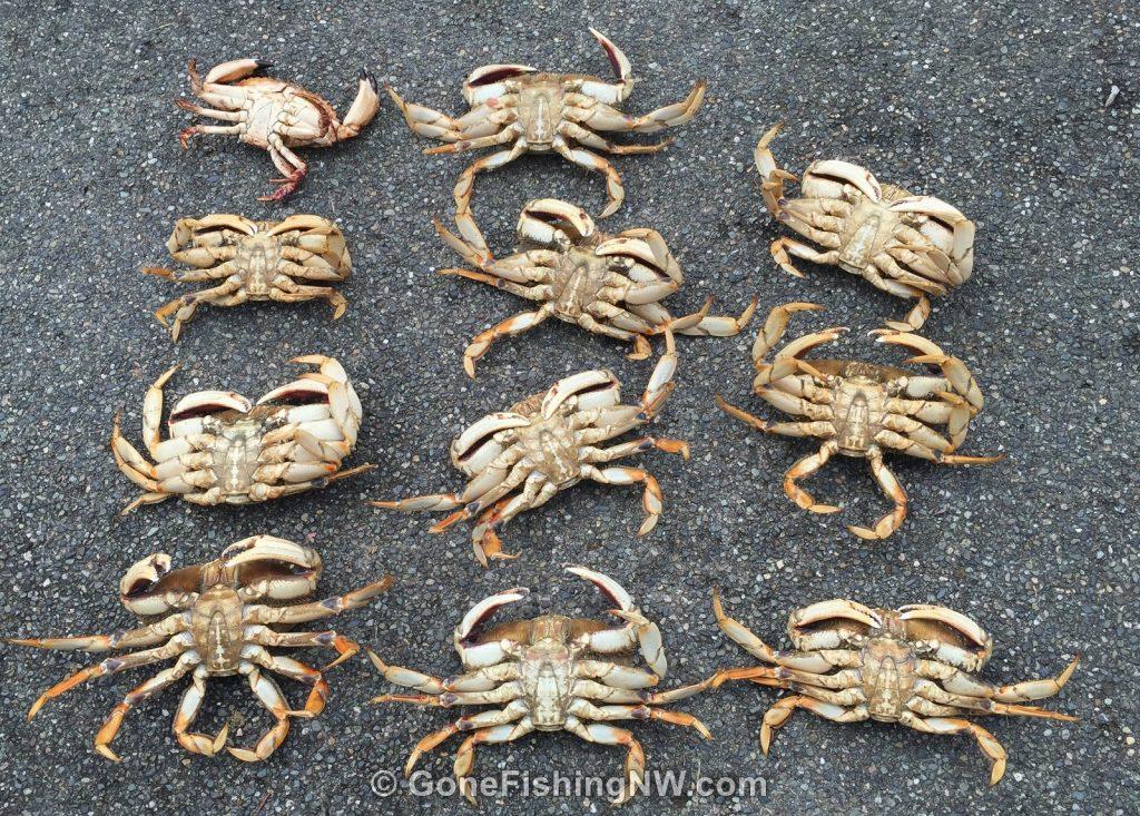 July 2016 Crabbing